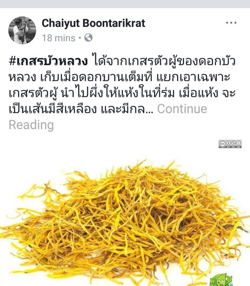 สมุนไพรรักษาโรค อาการนอนไม่หลับ ช่วยเรื่องการนอนหลับ หลับง่าย Thai Herb
