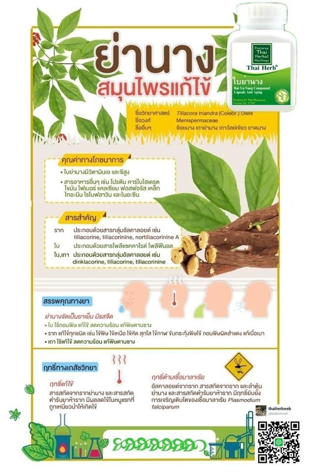 สมุนไพรรักษาโรค ย่านาง Thai Herb ปรับสมดุล ชะลอชรา รักษาอาการ ข้ออักเสบ เกาต์ ลดกรดยูริก พิวริน แคปซูล ราคาถูก ราคาส่ง