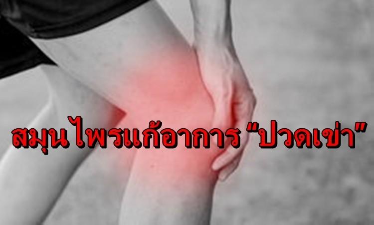 สมุนไพรรักษาโรค แก้ปวดเมื่อย คลายเส้น  คลายเส้น ปวดข้อ เคล็ดขัดยอก