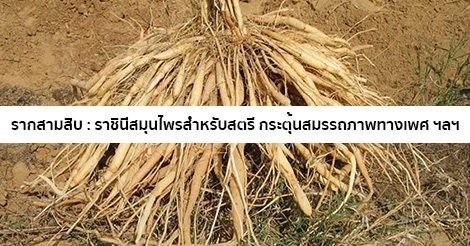 สมุนไพรรักษาโรค Thai Herb รากสามสิบ ศตวารี กระชับช่องคลอด ลดตกขาว
