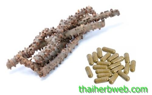 สมุนไพรรักษาโรค บอระเพ็ด Thai Herb ลดน้ำตาล เบาหวาน