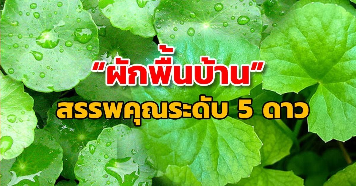 สมุนไพรรักษาโรค บัวบก Thai Herb บำรุงสมอง บำรุงความจำ อัลไซเมอร์