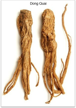 สมุนไพรรักษาโรค ตังกุย Thai Herb บำรุงโลหิต ประจำเดือนมาไม่ปกติ แก้ปวดประจำเดือน ขับน้ำคาวปลา มดลูกเข้าอู่