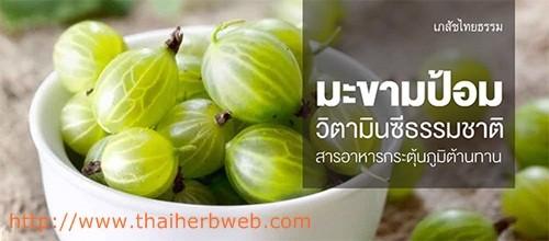 สมุนไพรรักษาโรค มะขามป้อม Thai Herb ผลไม้ที่วิตามินซีสูงที่สุดในโลก แก้หวัด แก้ไอ เพิ่มภูมิต้านทาน