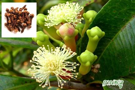 สมุนไพร รักษาโรค Thai Herb บำรุงโลหิต แคปซูล