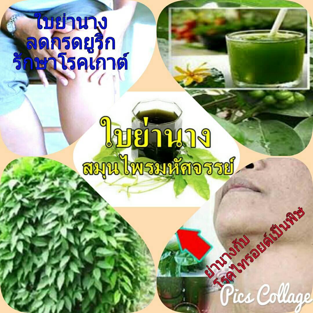 สมุนไพร รักษาโรค Thai Herb ปรับสมดุลภายใน ไทลอยด์