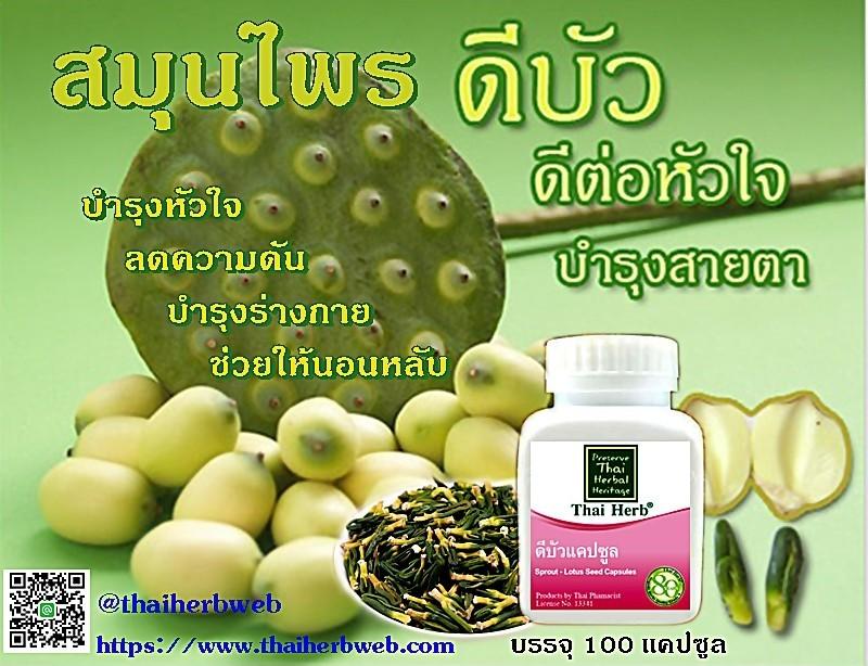 สมุนไพรรักษาโรค ดีบัวแท้ โรคหัวใจ หลอดเลือดหัวใจ Thai Herb บำรุงหัวใจ