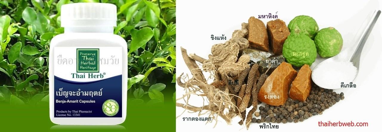 เบญจอำมฤตย์ สมุนไพรรักษา ต้าน ป้องกัน โรคมะเร็ง Thai Herb
