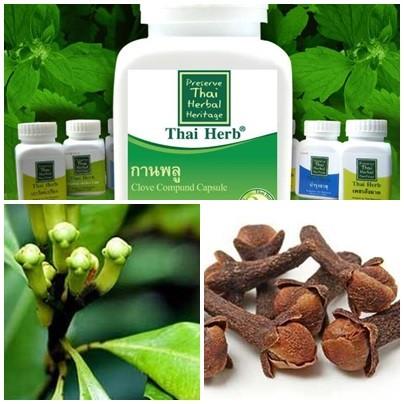 สมุนไพรรักษาโรค กานพลู Thai Herb ช่วยย่อย ขับลม ท้องอืด ท้องเฟ้อ