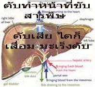 สมุนไพรรักษาโรค ตรีผลา แคปซูล thaiherb ล้างพิษ ดีท็อกซ์ ไขมันพอกตับ