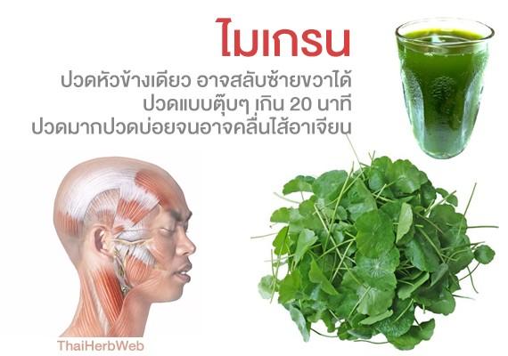 สมุนไพร รักษาโรค Thai Herb ไมเกรน