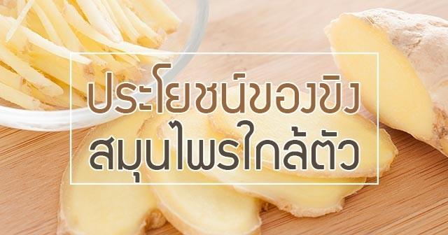 สมุนไพร รักษาโรค ขิงแก่ค้ด Thai Herb