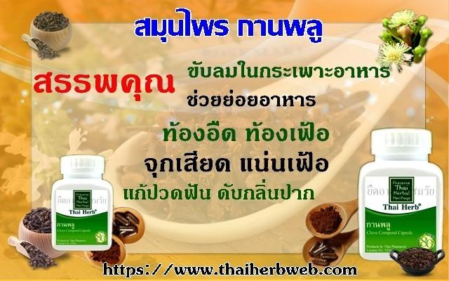 ดอกตูม - รับประทานขับลม ใช้แต่งกลิ่น ดอกกานพลูแห้ง ที่ยังไม่ได้สกัดเอาน้ำมันออก และมีกลิ่นหอมจัด มีน้ำมันหอมระเหยมาก รสเผ็ด ช่วยขับลม แก้อาการท้องอืด ท้องเฟ้อ ปวดท้อง และแน่นจุกเสียด แก้อุจจาระพิการ แก้โรคเหน็บชา แก้หืด แก้ไอ แก้น้ำเหลืองเสีย แก้เลือดเสีย ขับน้ำคาวปลา แก้ลม แก้ธาตุพิการ บำรุงธาตุ ขับเสมหะ แก้เสมหะเหนียว ขับผายลม ขับลมในลำไส้ แก้ท้องเสียในเด็ก แก้ปากเหม็น แก้เลือดออกตามไรฟัน แก้รำมะนาด กับกลิ่นเหล้า แก้ปวดฟัน