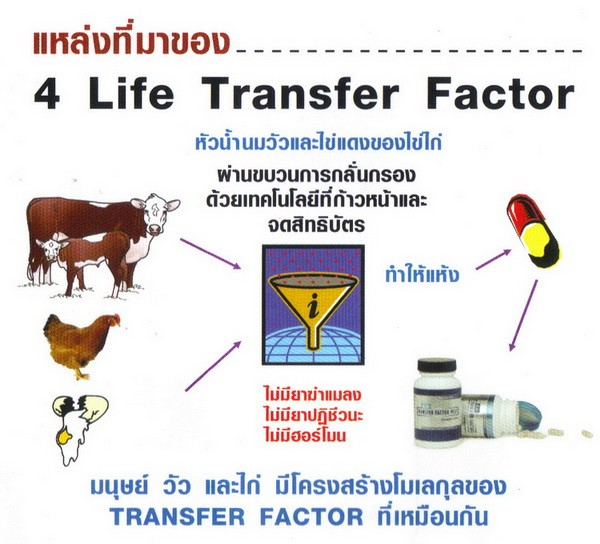 แหล่งที่มา 4ไล้ฟ์ ทรานสเฟอร์ แฟกเตอร์