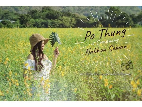 Po Thung is Comeming Nakhon Sawan  หนาวนี้เที่ยวไหน…ทุ่งปอเทืองไง จะที่ไหนหล่ะ