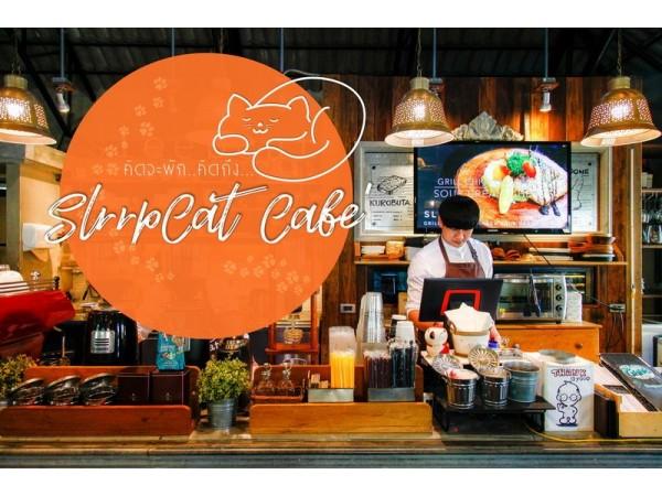 คิดจะพัก..คิดถึง..Sleep cat Café