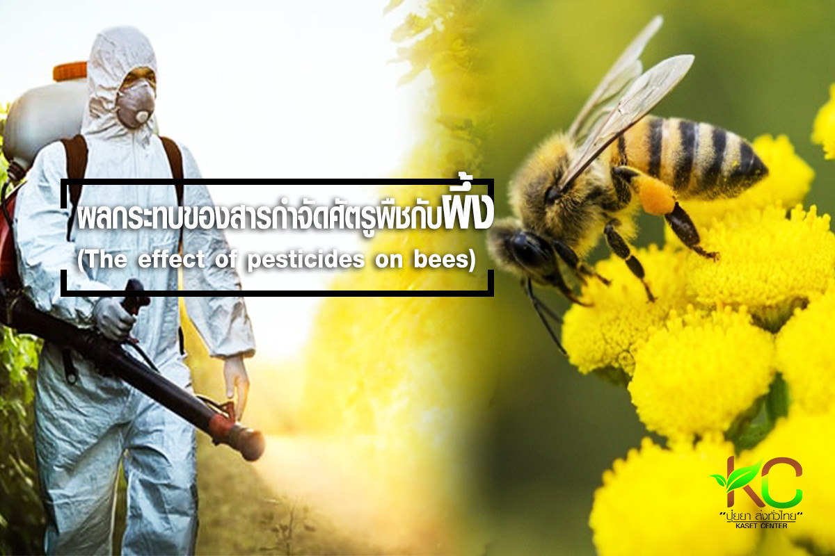 ผลกระทบของสารกำจัดศัตรูพืชกับผึ้ง